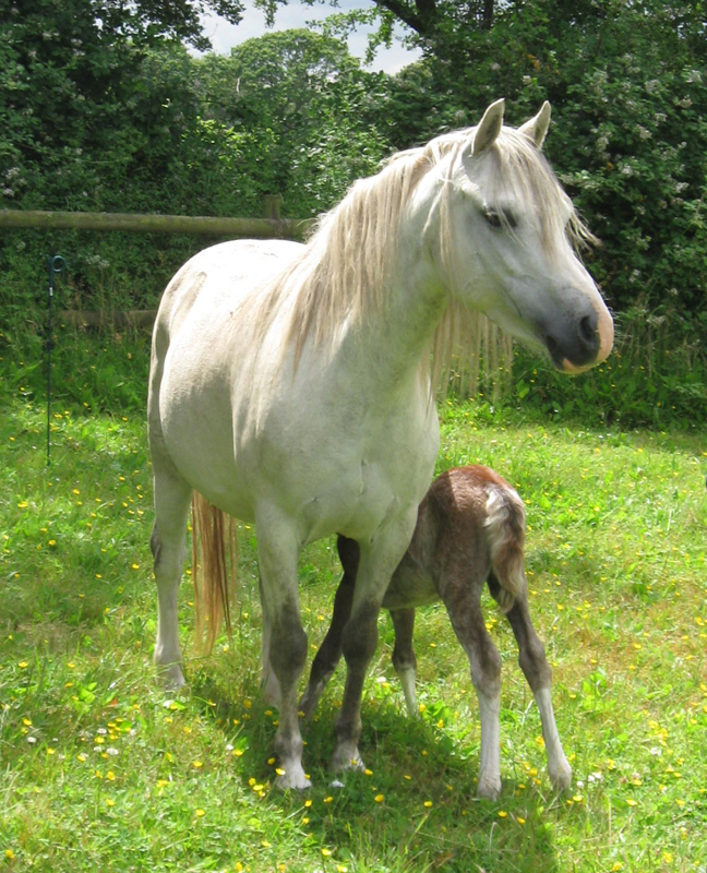Questa with foal